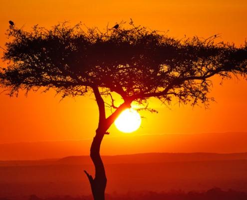Sonnenuntergang in Afrika mit Baum